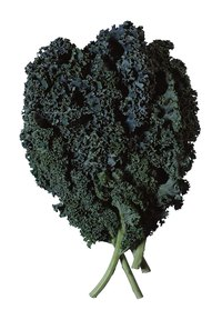 Kale grows well in temperate climates for most of the year.