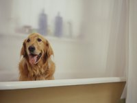 Installing a basic model MAXX bathtub is not difficult, although beyond the capabilities of a golden retriever.