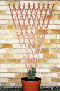 Lattice makes an attractive and efficient trellis.
