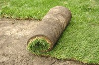 Water the soil surface before laying sod.