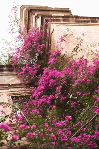 Colorful bougainvillea provides a tropical feel.