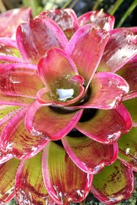 Bromeliads create a splash of color.