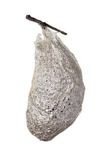 Use an image of a real cocoon as inspiration.