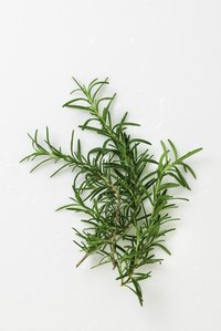 Grow rosemary for its flavorful leaf sprigs.