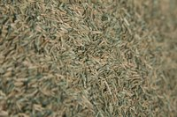 Use fresh grass seed on the lawn to ensure best germination rates.