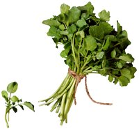 Watercress prefers running water, but it also grows in buckets.