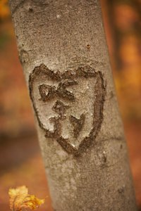 Carve a heart into a tree to display your affection for a loved one.