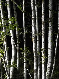 The rich colors of the birch play nicely with your home decor.