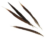 Straight pheasant feathers are bent to accent display birds and crafts.