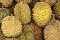 Durian fruit has a distinctive look and smell.