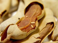 Inside their papery pods, tamarind fruits dry to a figlike consistency.