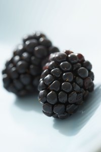 Rich in antioxidants, blackberries are easy to grow -- even for novice gardeners.