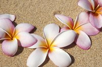 Hawaiian plumeria flowers are easy to make.