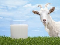 Goat's milk provides a fresh and tangy kick to jameed.