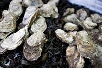 Close-up of fresh oysters