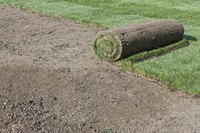 A roll of new sod ready for installation.