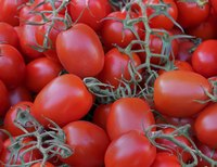 """Roma"" tomatoes are sometimes called plum tomatoes."