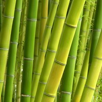 Your bamboo basket should last for years and years.