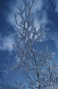 Create frost effects on small branches using a supersaturated Epsom salt solution.