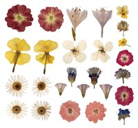 How to press flowers in wax paper ehow preserve flower samples in wax paper for a keepsake from each gardening season mightylinksfo