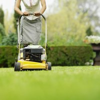 Mow your lawn regularly to prevent chinch bugs returning.