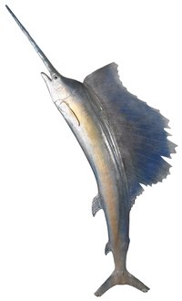 A swordfish is an inventive costume for a child or adult.