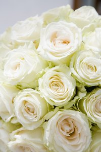 A white rose helps absorb color.