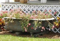 Cascading plants that spill over the edge work well in bathtub container gardens.