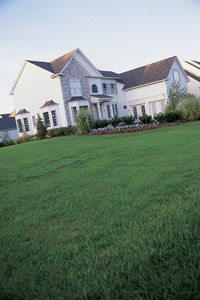Healthy turf can suppress dallisgrass and crabgrass.