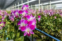 Humid greenhouse conditions encourage snow mold on orchids.