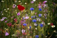 Wildflowers offer a dazzling array of colors and shapes.