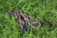 Worms are great for fish bait, but you might not want them in your lawn.