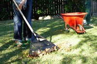Reseed your Northwest lawn in late summer or mid-spring.