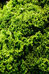 Kale and spinach are two leafy greens with very different textures.