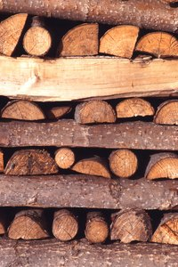 Hardwood logs are used to culture sheepshead mushrooms.