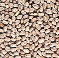 Pintos and other dried beans are susceptible to insect pests.