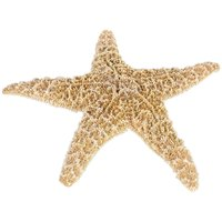 Starfish can be preserved and used to display or in craft projects.