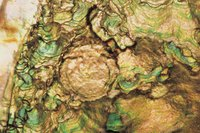 Abalone is caught in many areas including California, Mexico, Japan and South Africa.