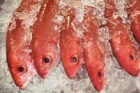 Rockfish colors vary among species.