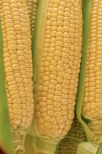 Corn is rich with vitamins B and C.