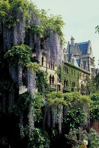 Both wisteria and grapes can grow 10 feet or more in a year and quickly reach massive proportions.