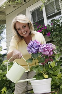 Hydrangea loves water, so don't let it dry out in summer.
