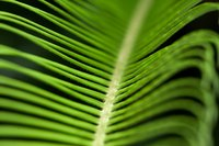 Use tissue paper palm fronds for a variety of crafts.