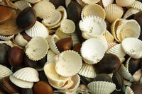 Make seashell art using craft supplies.