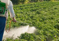 Man spraying a garden.