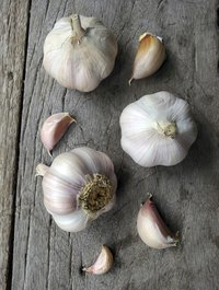 Keep the biggest clove in each garlic bulb for next year's crop.