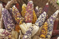 Choose corn with husks intact to create a colorful door swag.
