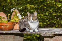 Cat sitting on garden bench