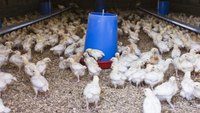 How to Get a Farm Loan to Produce Chickens