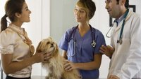What Jobs Can I Get With a Veterinary Technician Education?